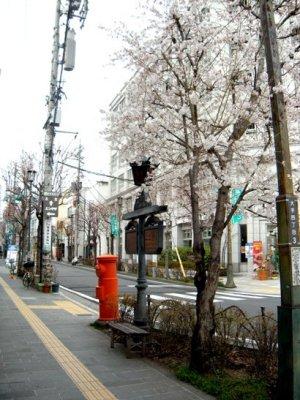 松本市 松本城 夜桜会 キャンドルナイト